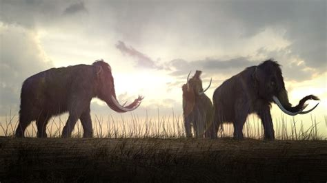 Ancient Floridians Butchered Mastodons and Maybe Kept Pet