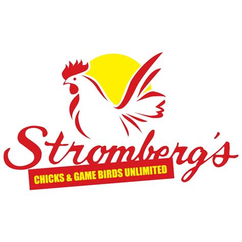 Stromberg's Chicks and Game Birds - YouTube