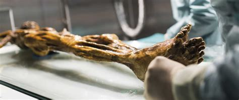 Ötzi - The mummy in the South Tyrol Museum of Archaeology