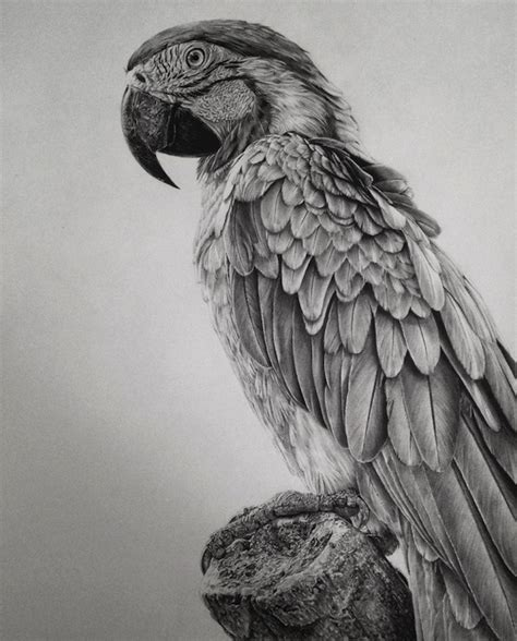 Incredibly Detailed Graphite Drawings Of People, Animals