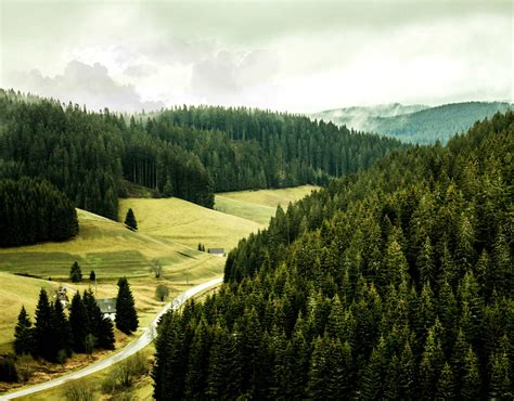 Explore Black Forest and visit more cities by bus