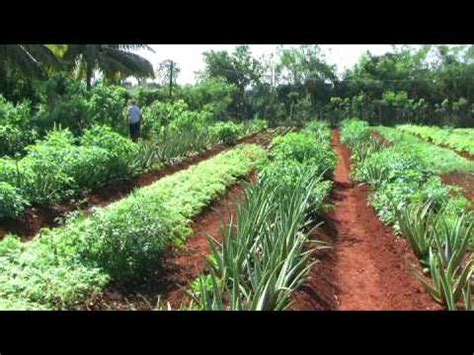 ORGANOPONICO! AN AGRICULTURAL REVOLUTION - YouTube