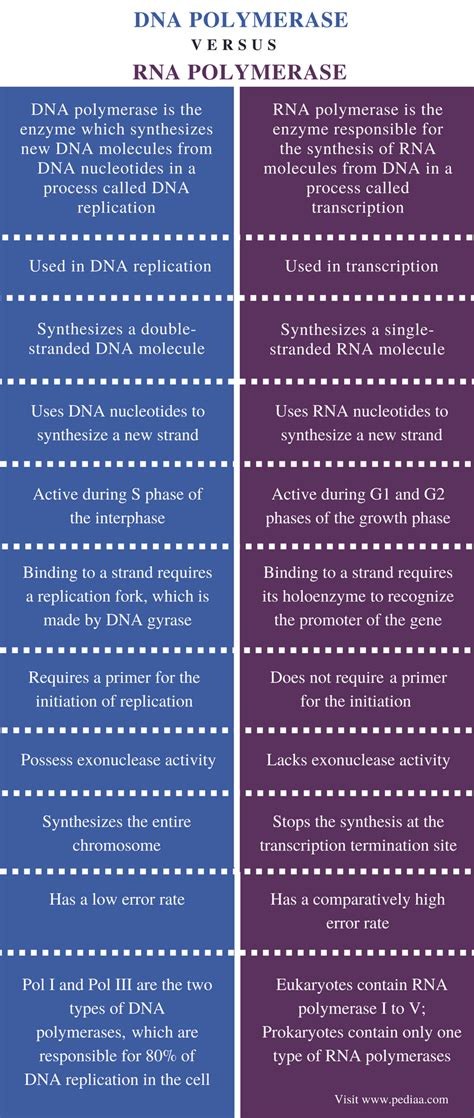 Difference Between DNA and RNA Polymerase   Definition